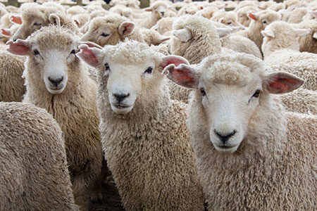 Wool Week and the Campaign for Wool